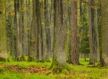 Forest, spring season, Brdy Czech Republic Royalty Free Stock Photo