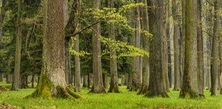 Forest, spring season, Brdy Czech Republic Stock Photography