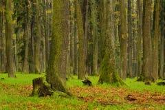 Forest, spring season, Brdy Czech Republic Royalty Free Stock Photography