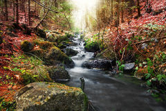 Forest spring in seasons transition Royalty Free Stock Photos