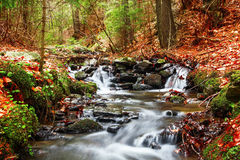 Forest spring in seasons transition Royalty Free Stock Images