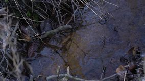 Forest Spring Surface Closep arkivfilmer