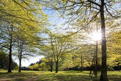 Forest in spring time Stock Photo