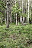 Forest in spring Royalty Free Stock Photography
