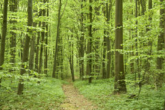 Forest in springtime. Stock Image