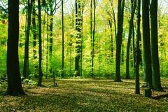 Forest in springtime Stock Photos
