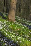 Forest in springtime Royalty Free Stock Photos