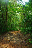 Forest in springtime with footpath Stock Image