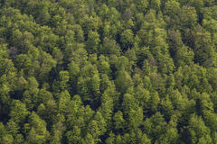 Forest sqare. Patern of a forest texture Stock Photo