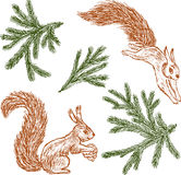 Forest squirrels and fir branches Stock Photography