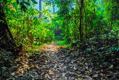 The Forest in the Sri Sat Cha Na Lai national park landscape, Sukhothai, Thailand Royalty Free Stock Photos
