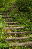 Forest Staircase Royaltyfria Foton