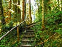 Forest Staircase con luce solare che emette luce tramite le foglie Immagini Stock