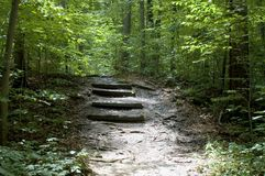 Forest Stairs. A set of stairs on a path in the forest Royalty Free Stock Photo