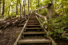 Forest Stairs Photo libre de droits