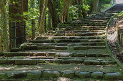 Forest Stairs imagem de stock royalty free
