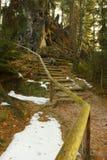 Forest Stairs Fotografía de archivo
