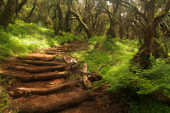 Forest stairs. Footpath in the rainforest in Garajonay national park, La Gomera, Canary Islands, Spain royalty free stock images