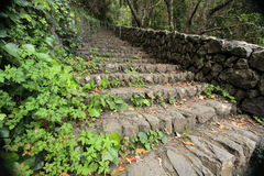 Forest stairs Royalty Free Stock Image