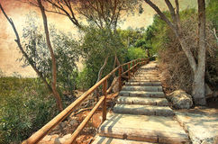 Forest stairs to the heaven. Natural Wooden stairs in forest. Heave. Relax. Chill out. Cyprus Paralimi. Summer. Good times at Holliday. Landscape. Nature and Royalty Free Stock Photography