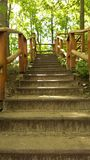 Forest stairs. Wooden stairs in a forest Stock Photos