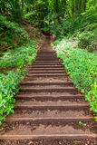 Forest stairway Stock Photo