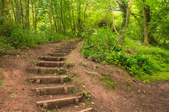 Forest stairway to heaven. Forestry steps into the beautiful woodland of Leigh woods in Bristol Stock Images