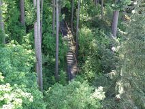 Forest Stairway to Heaven Stock Photo