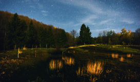 Forest with starry skies Royalty Free Stock Images