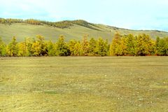 The forest-steppe Royalty Free Stock Images