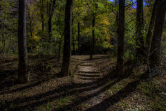 Forest Steps su Autumn Day Fotografia Stock Libera da Diritti