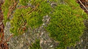 Forest Stone med mossa Royaltyfri Fotografi