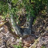 Forest on stone mountain slope. Royalty Free Stock Image