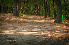 Forest stone path on sunny day for walking close. Up Royalty Free Stock Photo