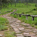 Forest stone pathway Stock Image