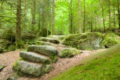 Forest Stone Staircase negro Imagen de archivo libre de regalías