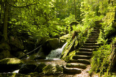 Forest Stone Staircase noir Images stock