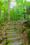 Forest Stone Staircase noir Photo stock