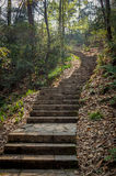 Forest stone stairs Royalty Free Stock Photos