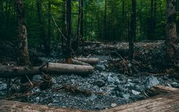 Forest with stones and logs laying on the ground, klontalersee switzerland royalty free stock photos
