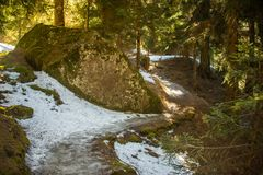 A snow on the path in a dark forest. Gentle sunlight between the trees. stock photography