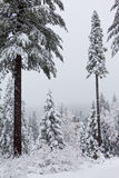Forest in the Storm Stock Photography