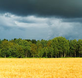 Forest. Forest with storm clouds before rain royalty free stock photography