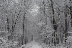 Forest after the storm. Traveling the trail through the forest after a winter storm Royalty Free Stock Image