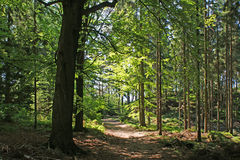 Forest. Straight path in a dense green forest Royalty Free Stock Images