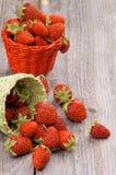 Forest Strawberries imagens de stock