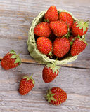 Forest Strawberries foto de stock royalty free