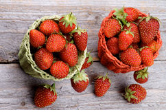 Forest Strawberries fotografia de stock