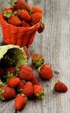 Forest Strawberries Stockbild