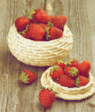 Forest Strawberries fotos de stock